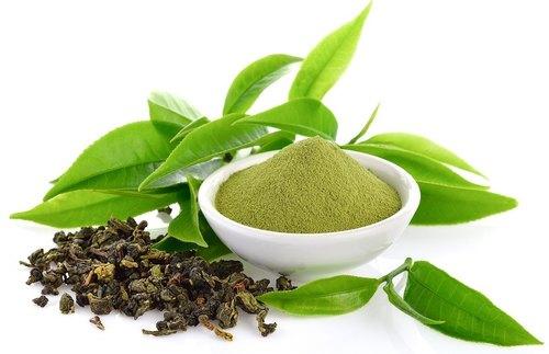 Green-tea-extract-powder